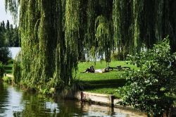 By The Weeping Willow