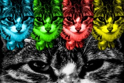 United Color of Cat