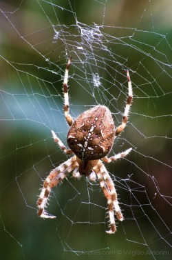 Spider Wide Web (sww)